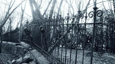 Peter Gordon visits Gartshore gardens - Monday 12 April 2021 (13)