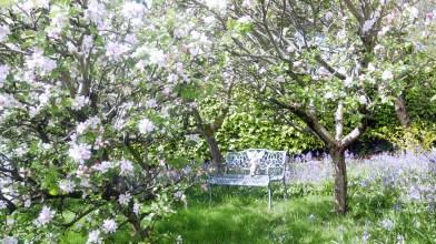 Tor-na-coille garden, Sunday 13 May 2018 (2)