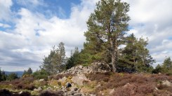 Mortlich hill - the collapsed Obelisk to Charles 10th Huntly [photos May 2021] (20)
