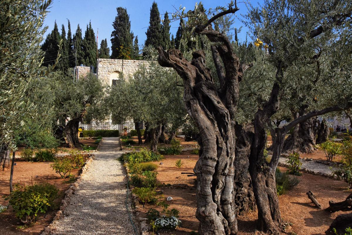 Garden Gethsemane, Jerusalem