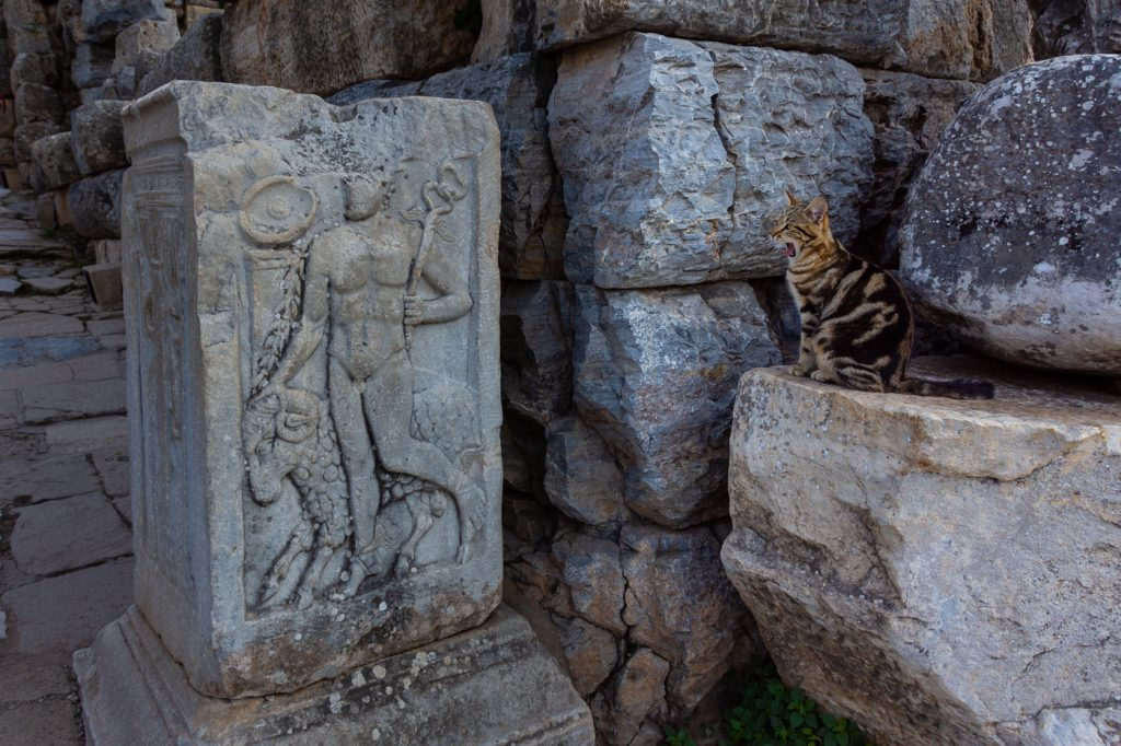 Cat at the Asclepion in Ephesus, Turkey
