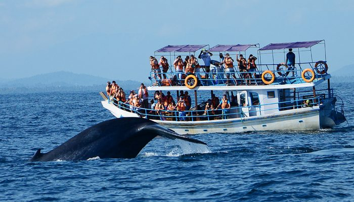 6-Sri-Lanka-Colombo-Whale-watching