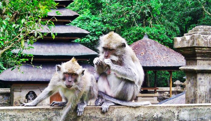 Bali-Alas-Kedaton-monkey-forest-2