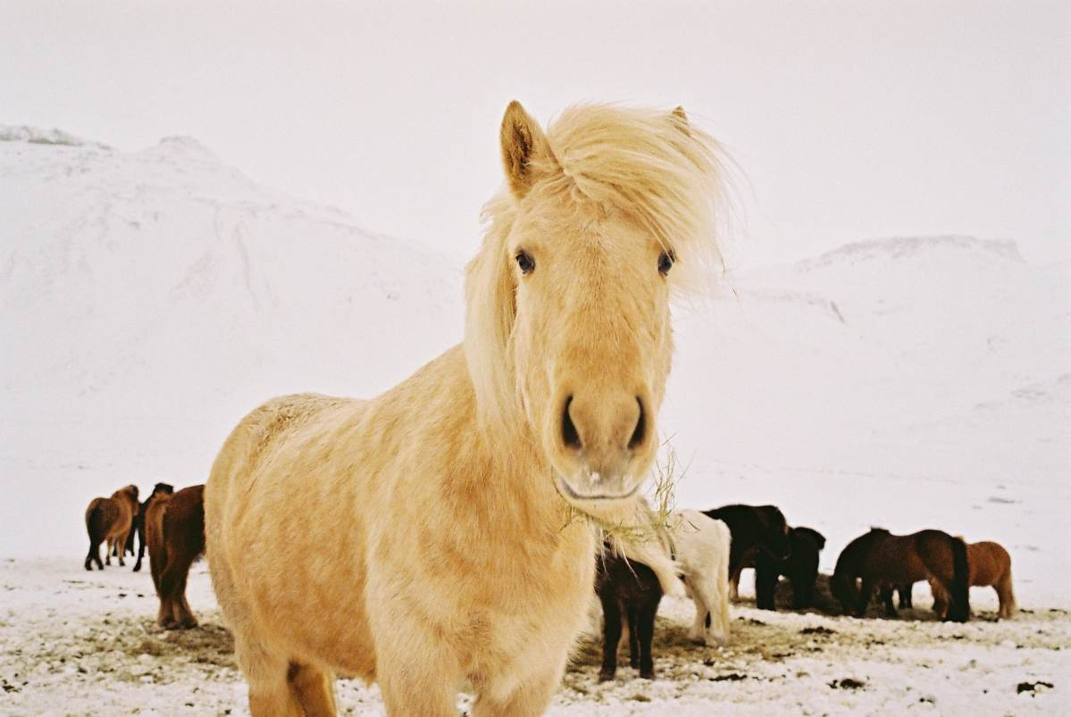 7 Reasons to Visit Iceland in Winter.