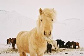 Iceland Winter