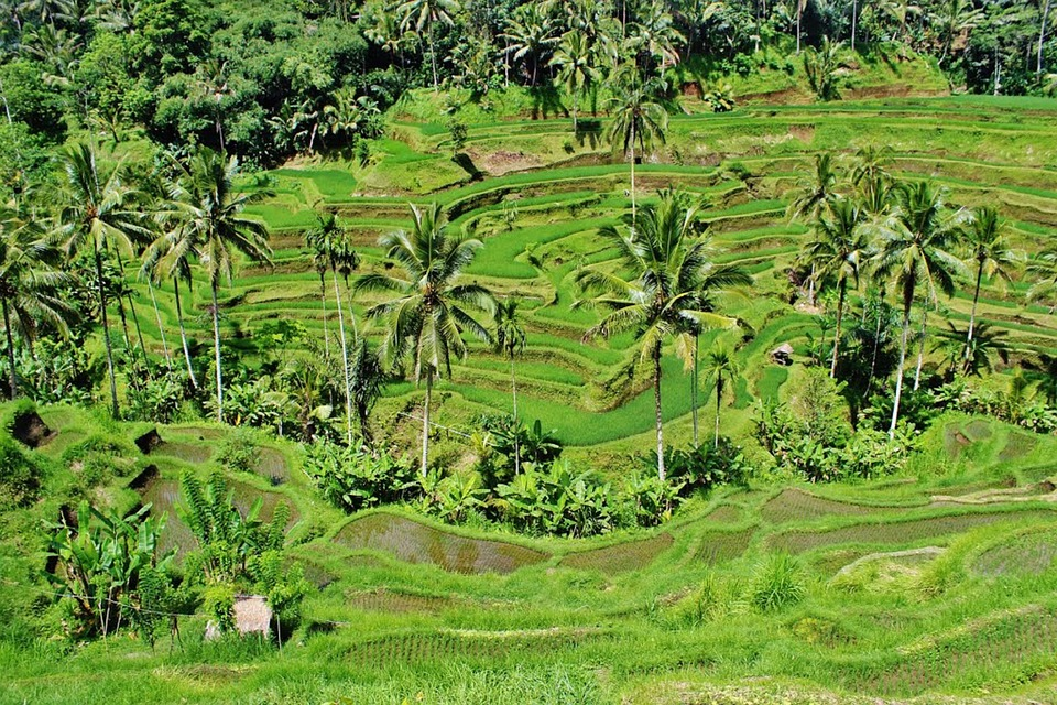 Bali Highlights Tour 1