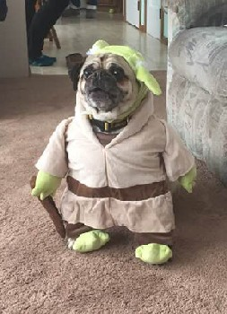 dress up pet day