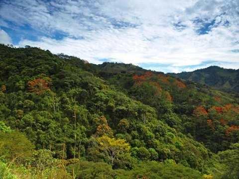 Отдых на Карибских островах, Пуэрто-Рико - «Карибский Национальный Лес»