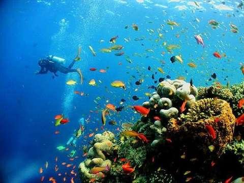 Отдых на Карибских островах, Доминикана - очень красивый, насыщенный подводный мир