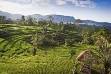 Отдых на Бали, цены - Рисовые террасы
