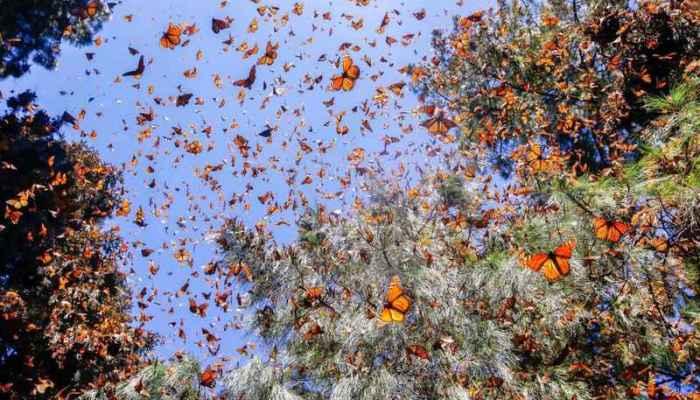 Долина бабочек в Родосе