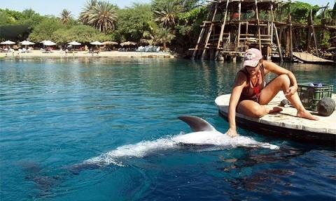 Отдых в Эйлате - Дельфиний Риф