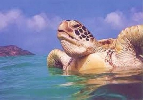 Отдых на острове Закинф, морские черепахи