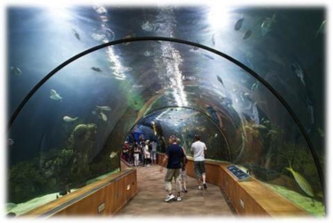 Отдых в Эйлате - гордость Эйлата, подводная обсерватория