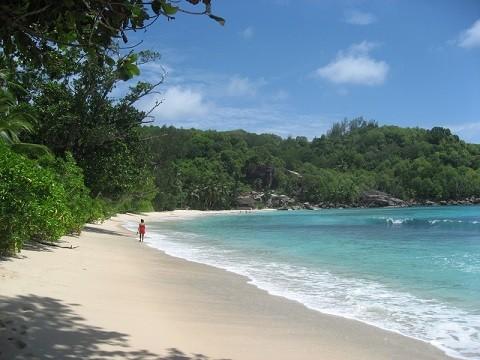 отдых на Сейшельских островах, Маэ, пляж Anse Intendanse в окружении кокосовых пальм