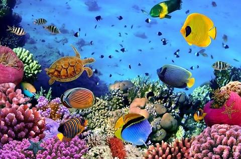 отдых на Сейшельских островах - удивительный подводный мир Сейшел
