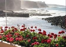 Отдых на островах Испании, канарские острова, очень разнообразный растительный мир