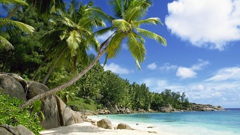 Отдых на Сейшельских островах, на всех пляжах у побережья растут кокосовые пальмы