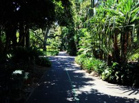 palmgrove4