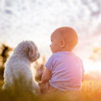Doggy friendly staycations