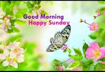 Happy Sunday Wish Picture 3