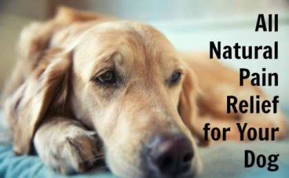 guide to pain and inflammation in pets natural relief