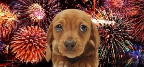 anxiety-fireworks-and-dogs
