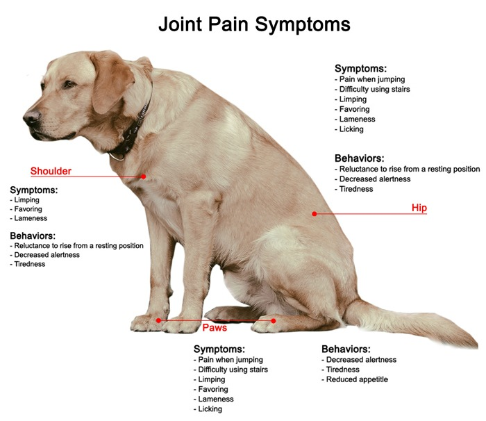 cbd-oil-for-dogs-arthritis-dog-joint-supplement