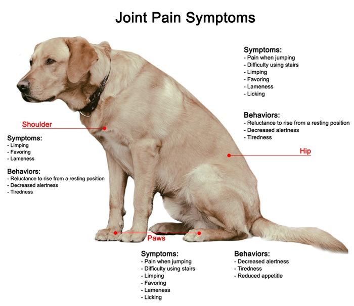 CBD & Mast Cell Tumors In Dogs Explained | HolistaPet