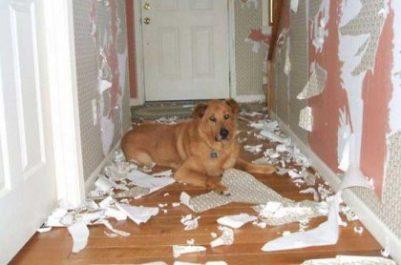 separation-dog-wallpaper-cbd-oil