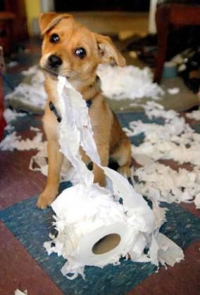 bad-doggy-trashed-bathroom-stress