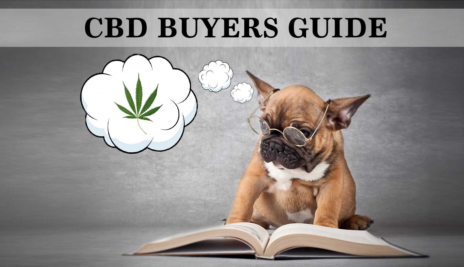 buy-cbd-for-dogs-buyers-guide2