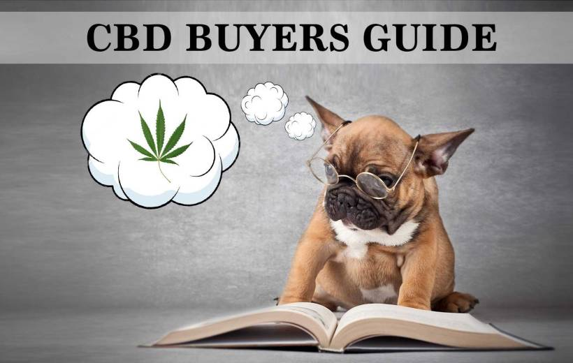 CBD Buyers Guide – Buying CBD Oil For Dogs & Cats
