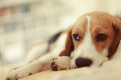 canine-bladder-cancer-symptoms