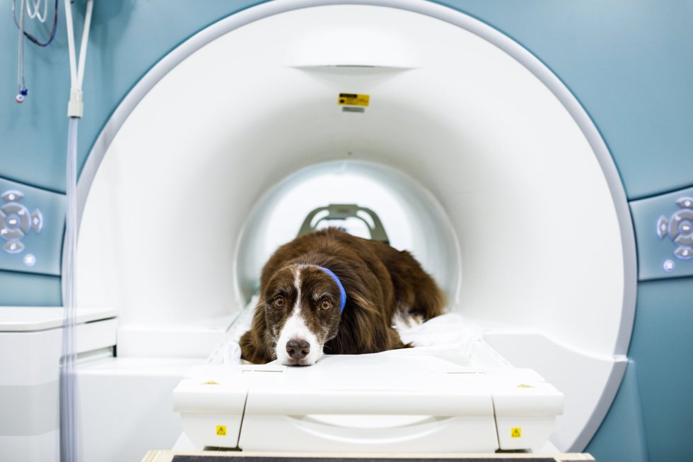 Small Dog Ct Scan Cost