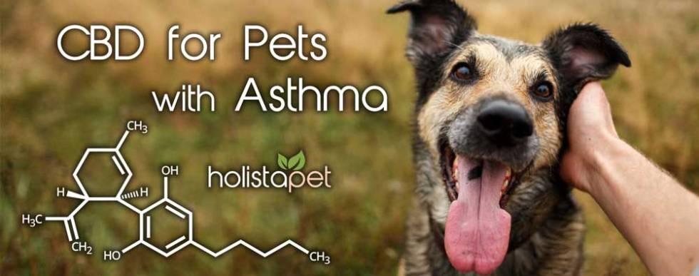 Holistapet CBD for pets with asthma