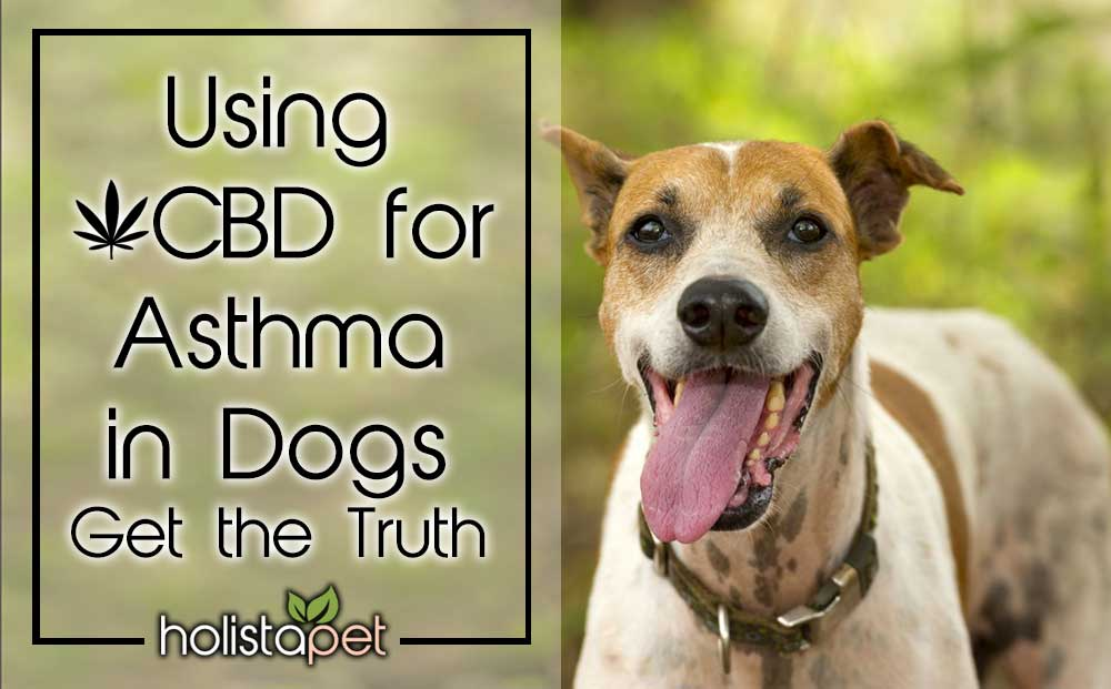 Using CBD For Asthma In Dogs – Get The Truth