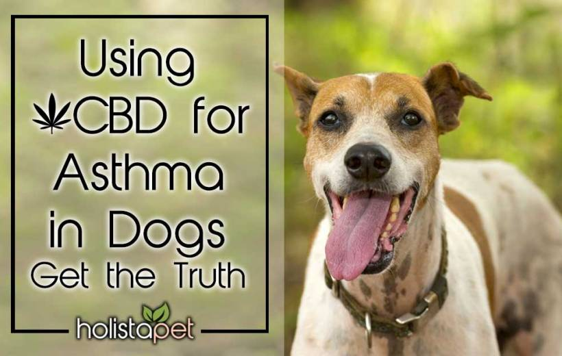 Using Cbd For Asthma In Dogs Get The Truth