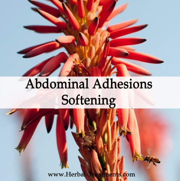 Herbal Medicine for Abdominal Adhesions Softening