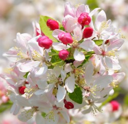 How Bach Flower Crab Apple supports natural healing in horses