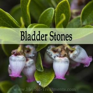 Herbal Medicine for Bladder Stones