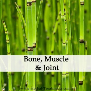 Herbal Treatments for Bone and Muscle Conditions