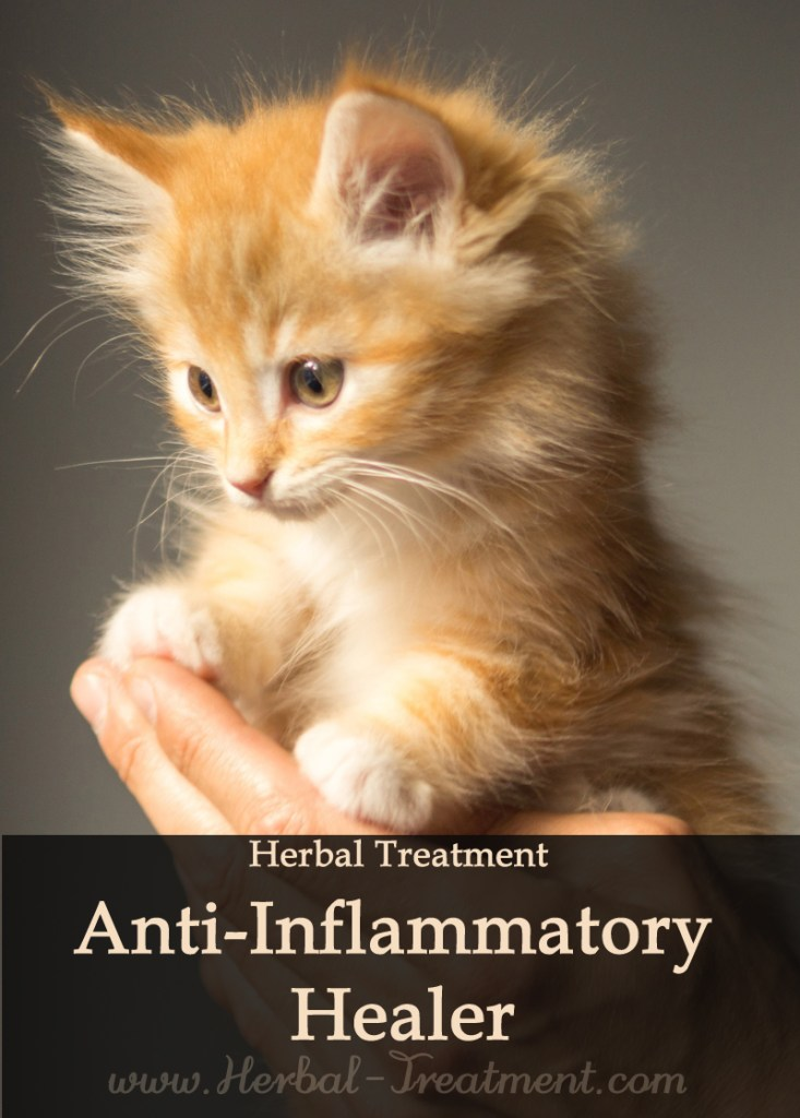 Herbal Treatment of Anti-Inflammatory Healer for Cats