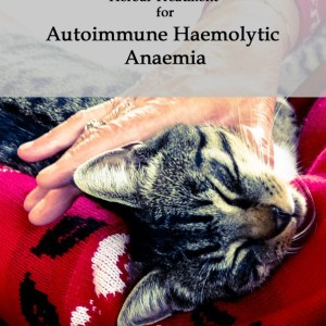 Herbal Treatment for Autoimmune Haemolytic Anaemia (AIHA) in Cats