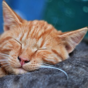 Herbal Treatments for Feline Brain and Nervous Conditions