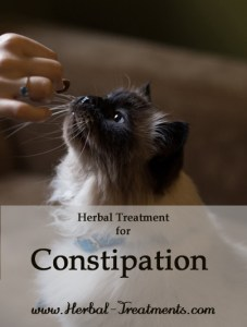 Herbal Treatment for Constipation in Cats