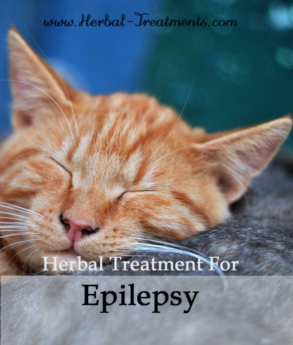 Herbal Treatment for Epilepsy & Seizure Recovery in Cats