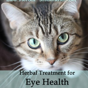 Herbal Treatment for Eye Health / Circulation in Cats
