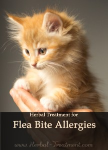 Herbal Treatment for Flea Bite Allergies in Cats