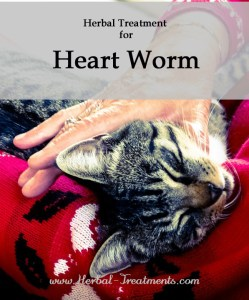 Herbal Treatment for Heart Worm in Cats
